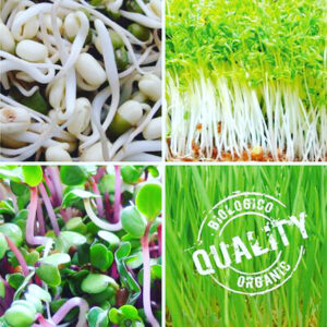Organic Sprouts Micro Greens